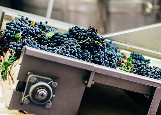produzione_vino